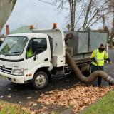 Leaf collection in Narrandera